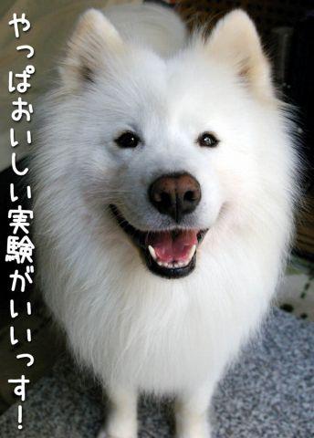 モクモク黒岡助手_c0062832_17564055.jpg