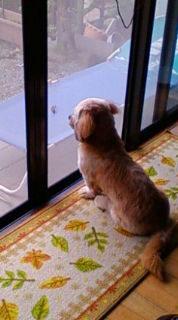 虫好きな犬_e0127286_23171189.jpg