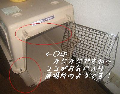 f0176499_17264163.jpg
