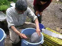 塩水選・温湯消毒、トウモロコシの種まきなど_c0167329_02752100.jpg
