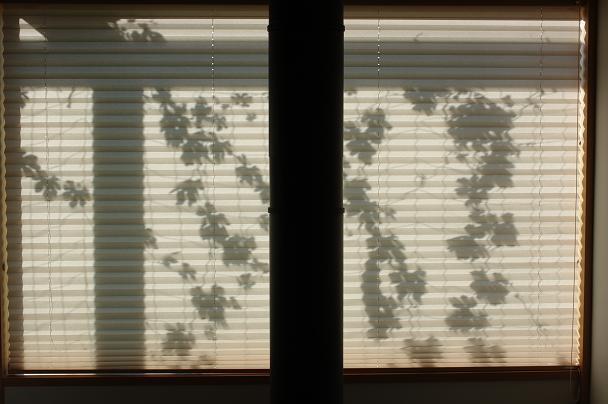 緑のカーテン_d0113340_21441389.jpg