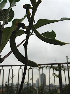 「ジャックと豆の木」のその後_f0160063_11294986.jpg