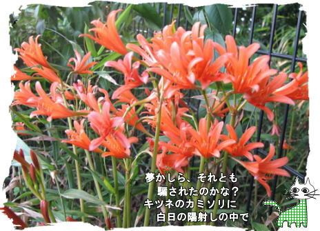 f0137096_203729.jpg