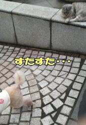 b0063399_23412837.jpg