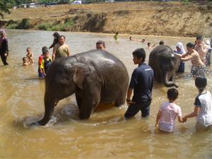 象さんが_c0154399_14392414.jpg