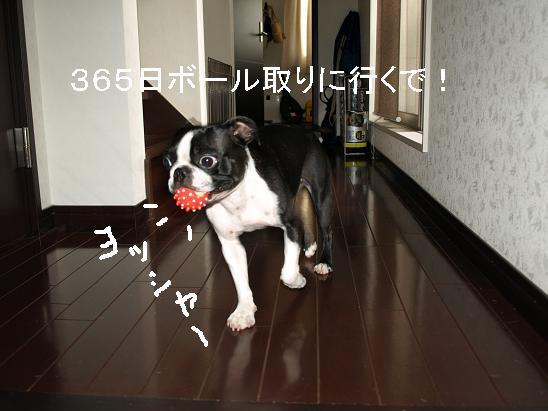 f0133316_2352440.jpg