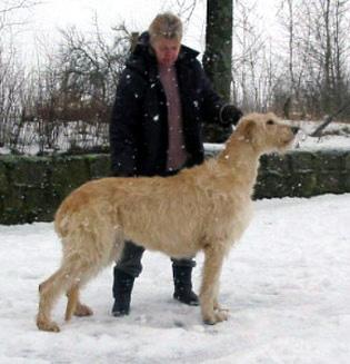 犬好きなんです_f0045624_624825.jpg