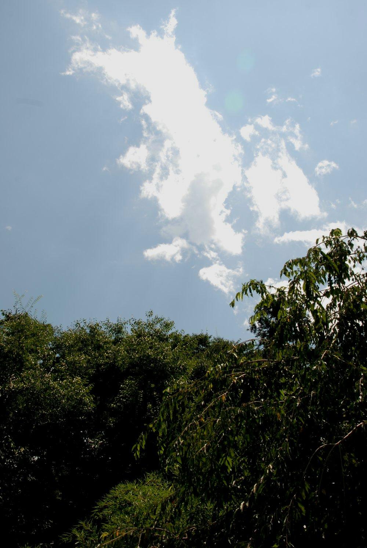 夏雲 歩゛ら里 山梨080815_c0162128_8523394.jpg