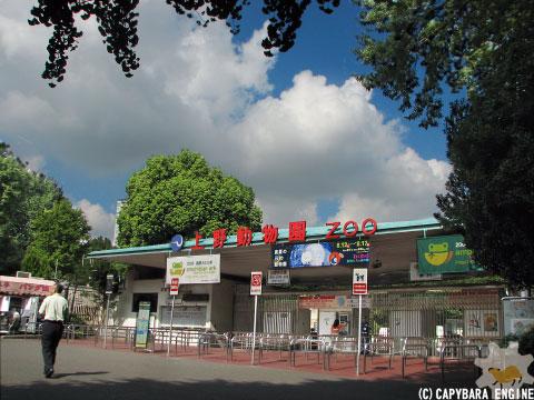 上野動物園、08年8月16日朝_f0138828_11242269.jpg