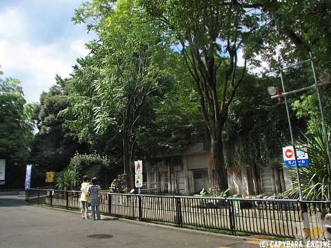 上野動物園、08年8月16日朝_f0138828_11254490.jpg