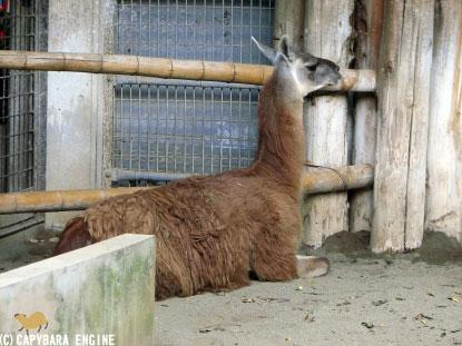 上野動物園、08年8月16日朝_f0138828_11295521.jpg