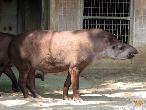 上野動物園、08年8月16日朝_f0138828_11301967.jpg