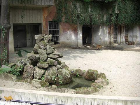 上野動物園、08年8月16日朝_f0138828_1130465.jpg