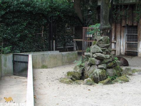 上野動物園、08年8月16日朝_f0138828_11311268.jpg