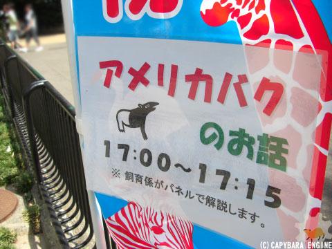 上野動物園、08年8月16日朝_f0138828_11313911.jpg