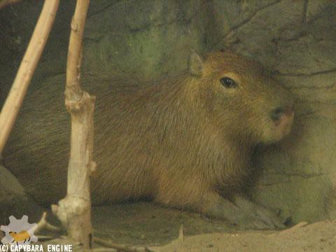 上野動物園、08年8月16日朝_f0138828_1134592.jpg
