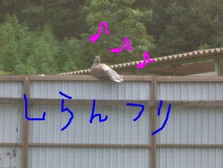a0099131_15234536.jpg
