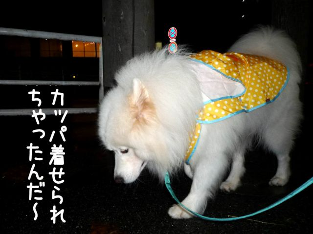 カッパ走行_c0062832_1857174.jpg
