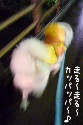 カッパ走行_c0062832_18572693.jpg