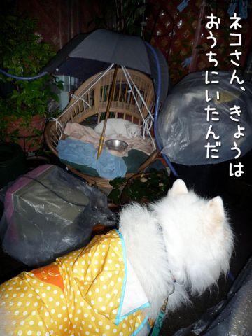 カッパ走行_c0062832_18574032.jpg