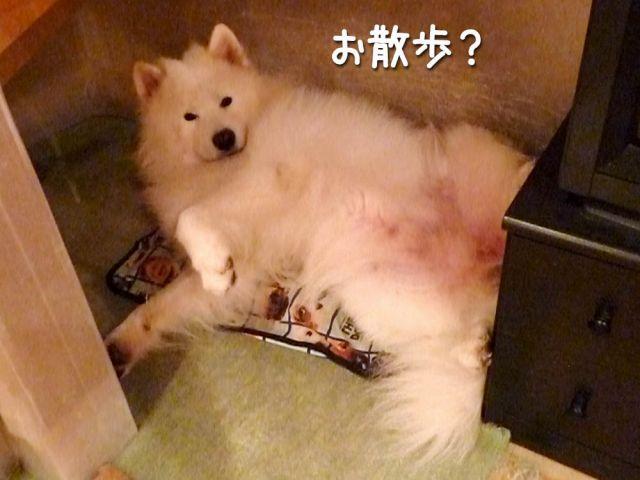 カッパ走行_c0062832_1857911.jpg