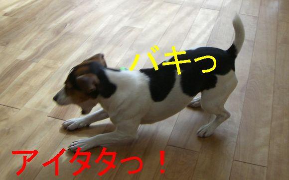 f0053952_16515245.jpg