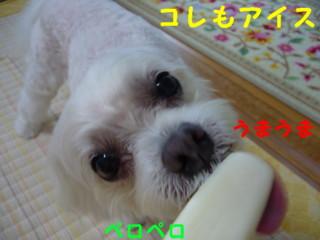 f0145192_15465870.jpg