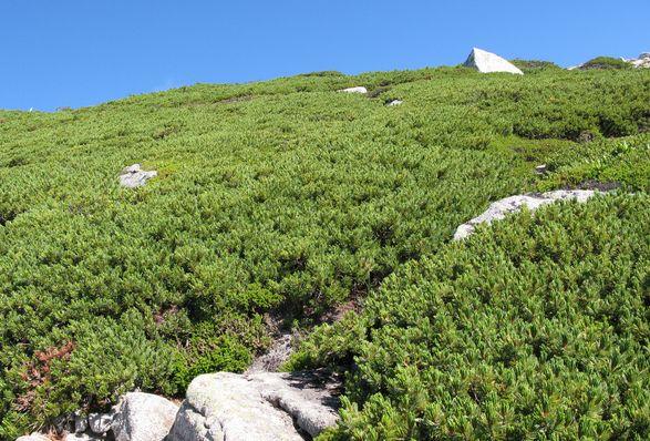 3000メートルからの眺め_c0073016_2250375.jpg