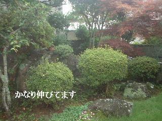 f0031037_19471410.jpg