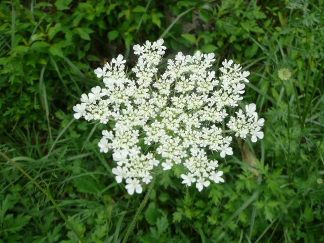 四国カルストに咲く野の花たち_f0099147_19514189.jpg