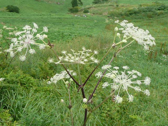 四国カルストに咲く野の花たち_f0099147_19521317.jpg