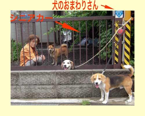 犬と人間の共存社会(1)_b0005652_10231995.jpg