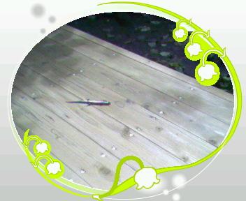 b0105259_11504729.jpg