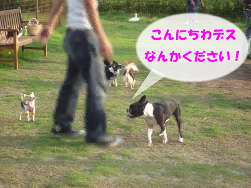 f0166359_2240156.jpg