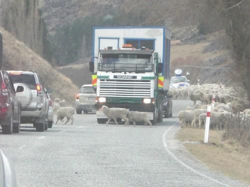 ニュージーランドと言えば★_c0151965_16173117.jpg