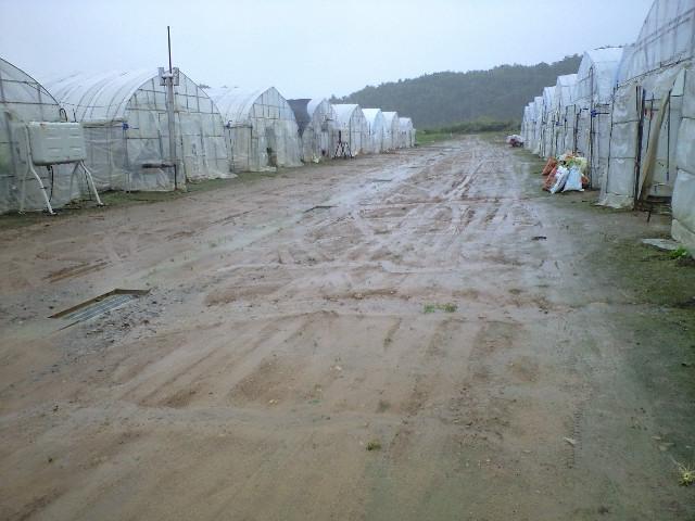 もう雨たくさんです_d0099708_8185148.jpg