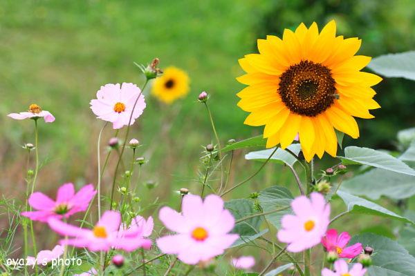 夏から秋へ_a0071514_2112154.jpg