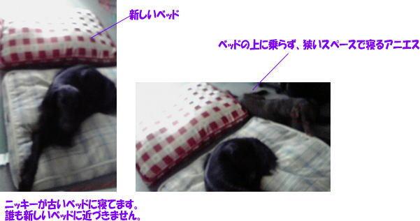 c0048736_884076.jpg