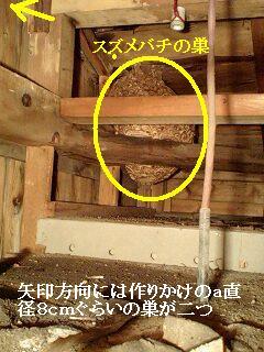 スズメバチの巣_f0031037_1724102.jpg