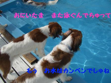 f0080745_030316.jpg