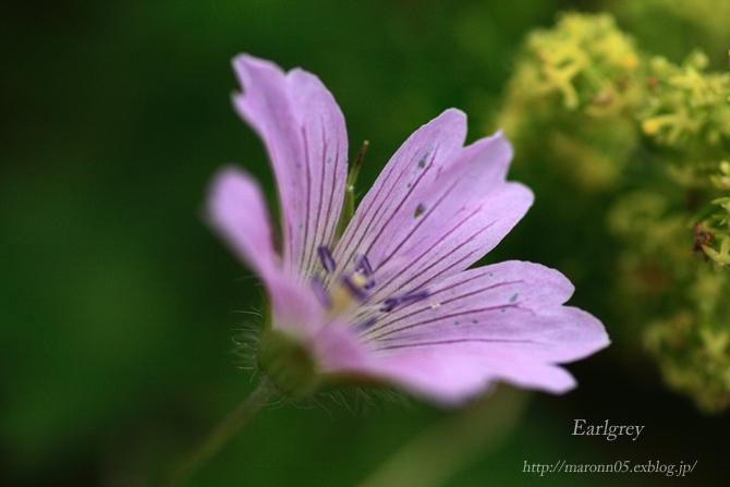 高原の夏花 (2)_f0019849_2225373.jpg