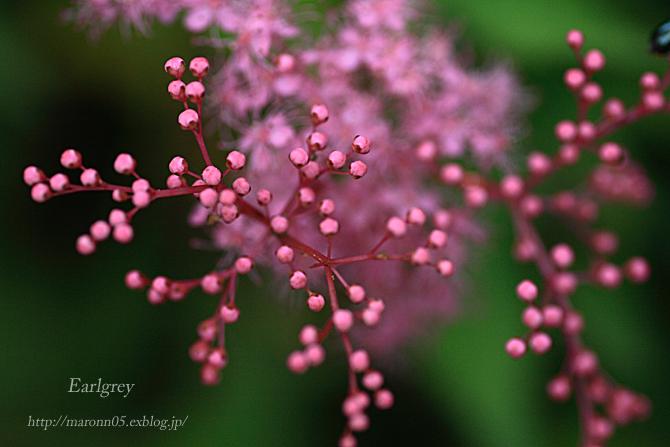 高原の夏花 (2)_f0019849_2226594.jpg