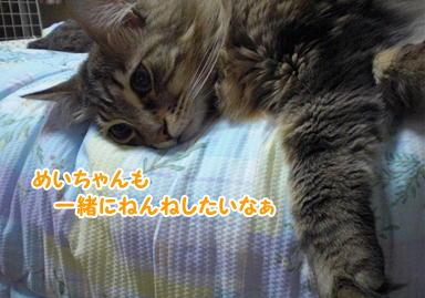 d0139352_037771.jpg