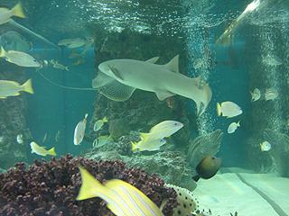 ハイビジョン沖縄美ら海水族館_c0025217_1818177.jpg