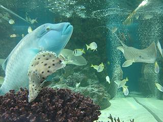 ハイビジョン沖縄美ら海水族館_c0025217_18182811.jpg