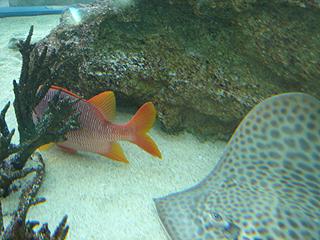 ハイビジョン沖縄美ら海水族館_c0025217_18183895.jpg