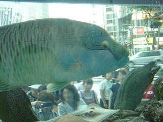 ハイビジョン沖縄美ら海水族館_c0025217_18185734.jpg