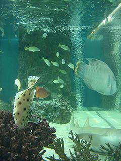 ハイビジョン沖縄美ら海水族館_c0025217_18189100.jpg