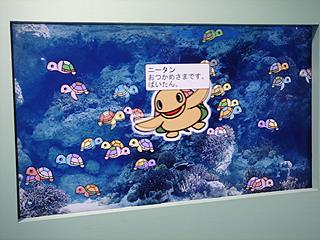 ハイビジョン沖縄美ら海水族館_c0025217_18195351.jpg