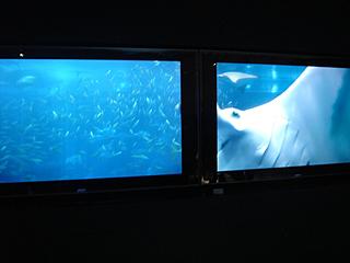 ハイビジョン沖縄美ら海水族館_c0025217_18201266.jpg
